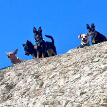 dogs on a bluff