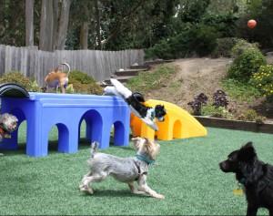 Small dog day care facility