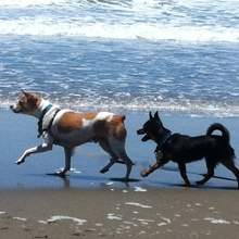 dogs walking at beach