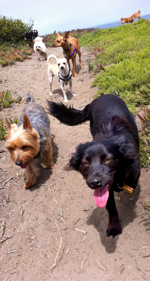 Small dogs on trail