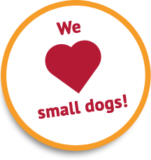 We Love Small Dogs!
