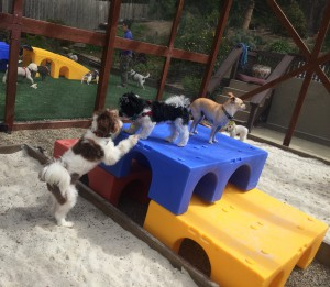 Small dog day care center