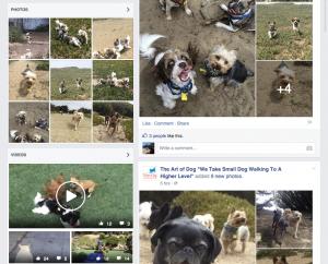 Small dog social posts