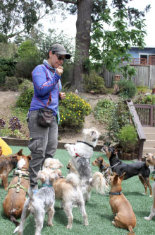 Trainer with attentive small dogs