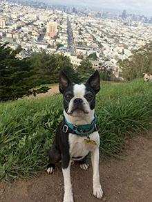 Small dog at SF park