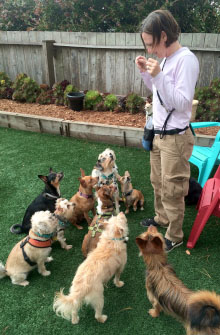 SF trainer with dogs