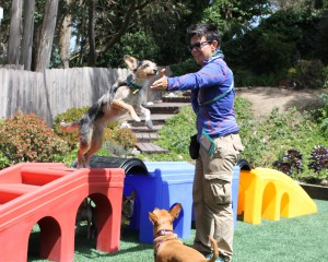 Small dog structured activities