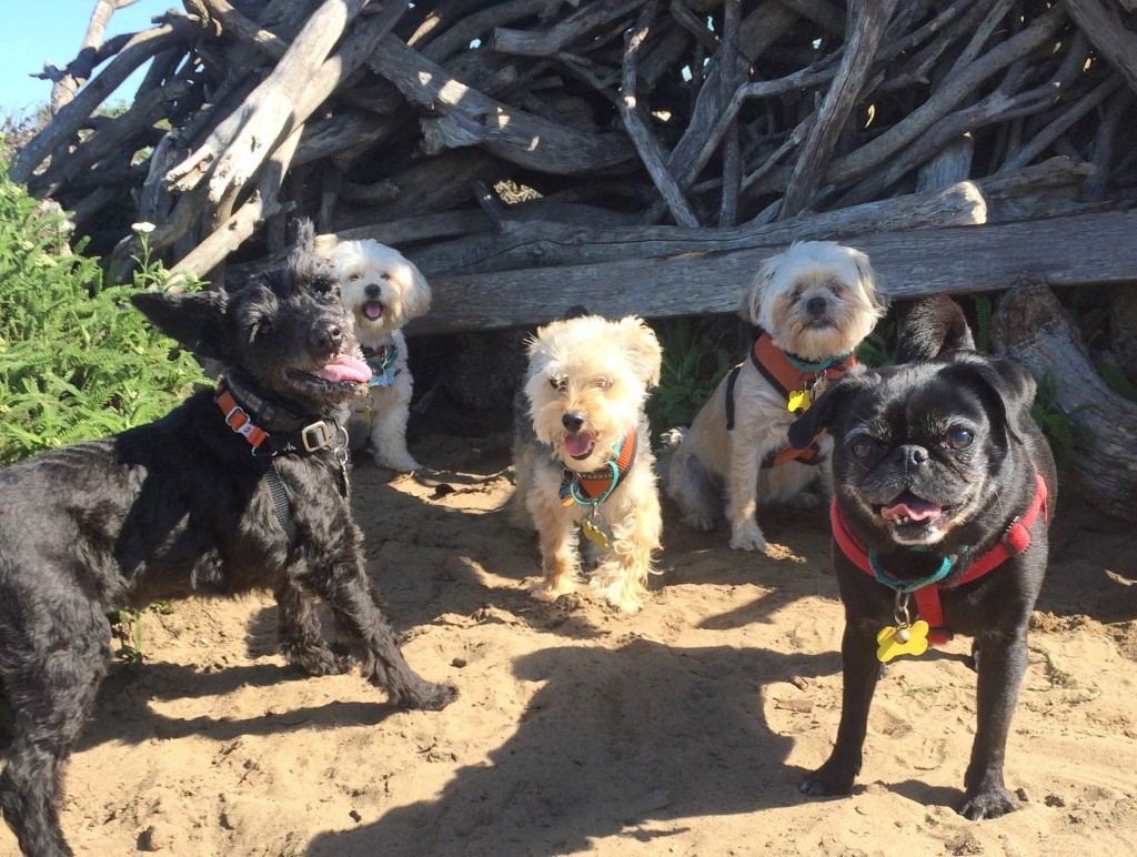 Small dog day care outing